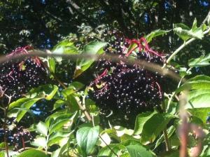 Hyldebær/LaCucinaNada