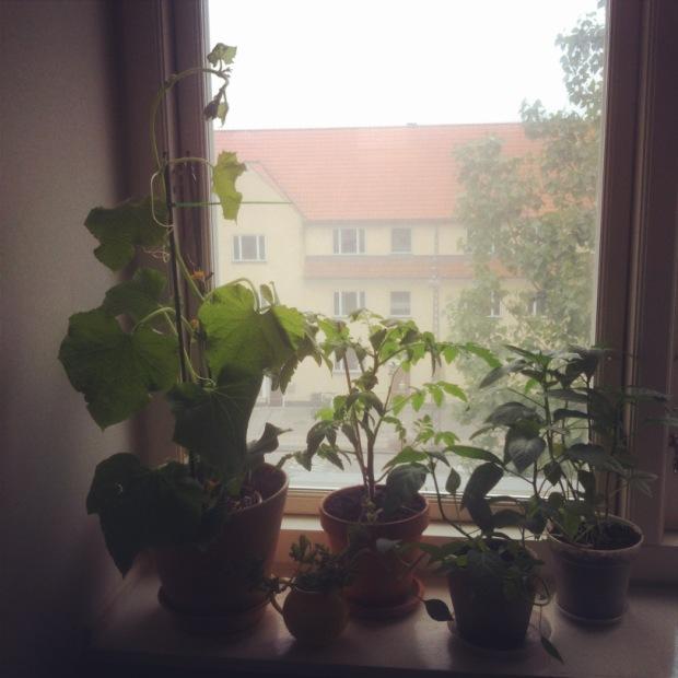 Windowfarming/LaCucinaNada