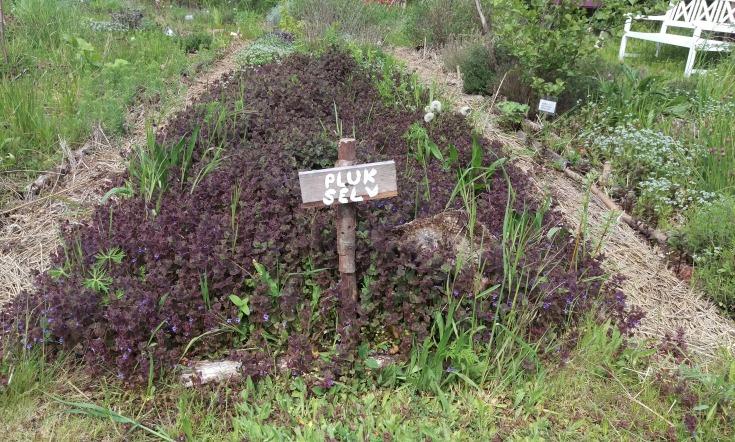 den helbredende have