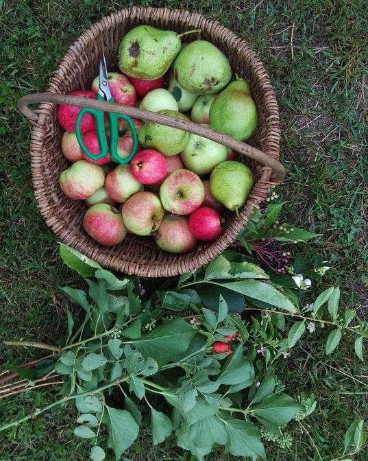 Æblerov/LaCucinaNada